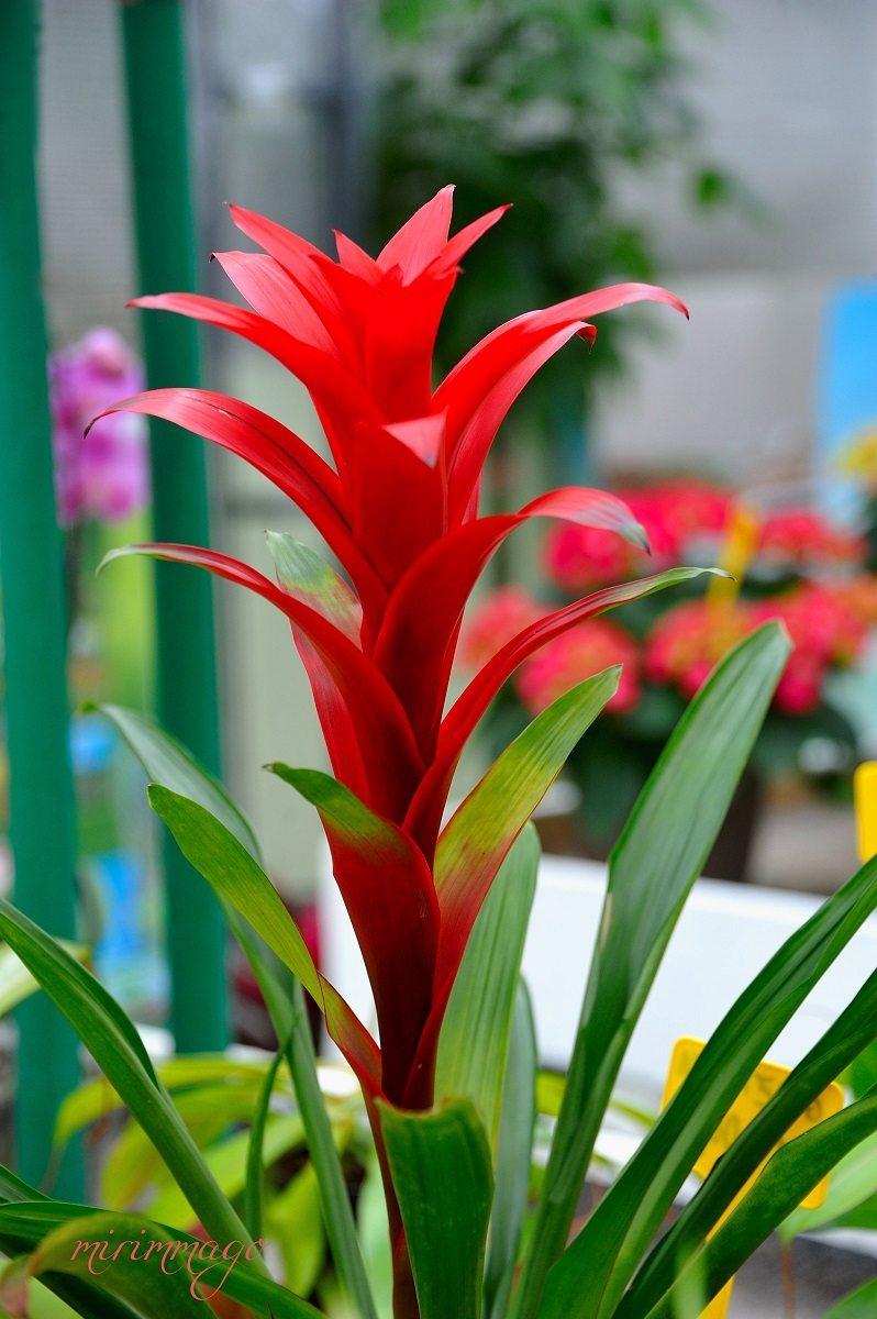 Piante, idee regalo, giardinaggio | BIOGESTE Vivai ...