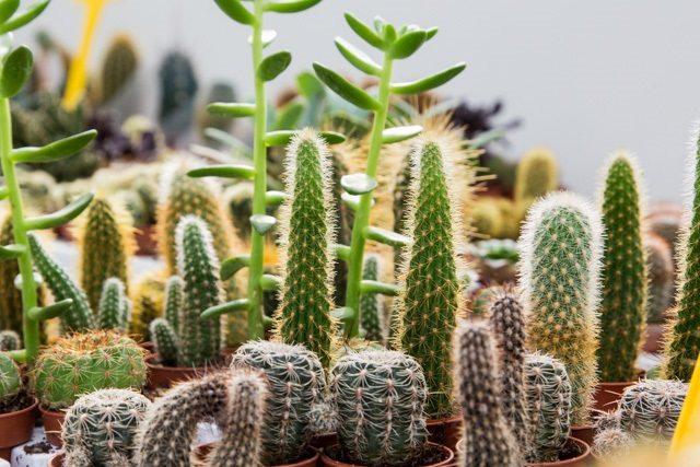 Piante idee regalo giardinaggio biogeste vivai - Piante regalo ...