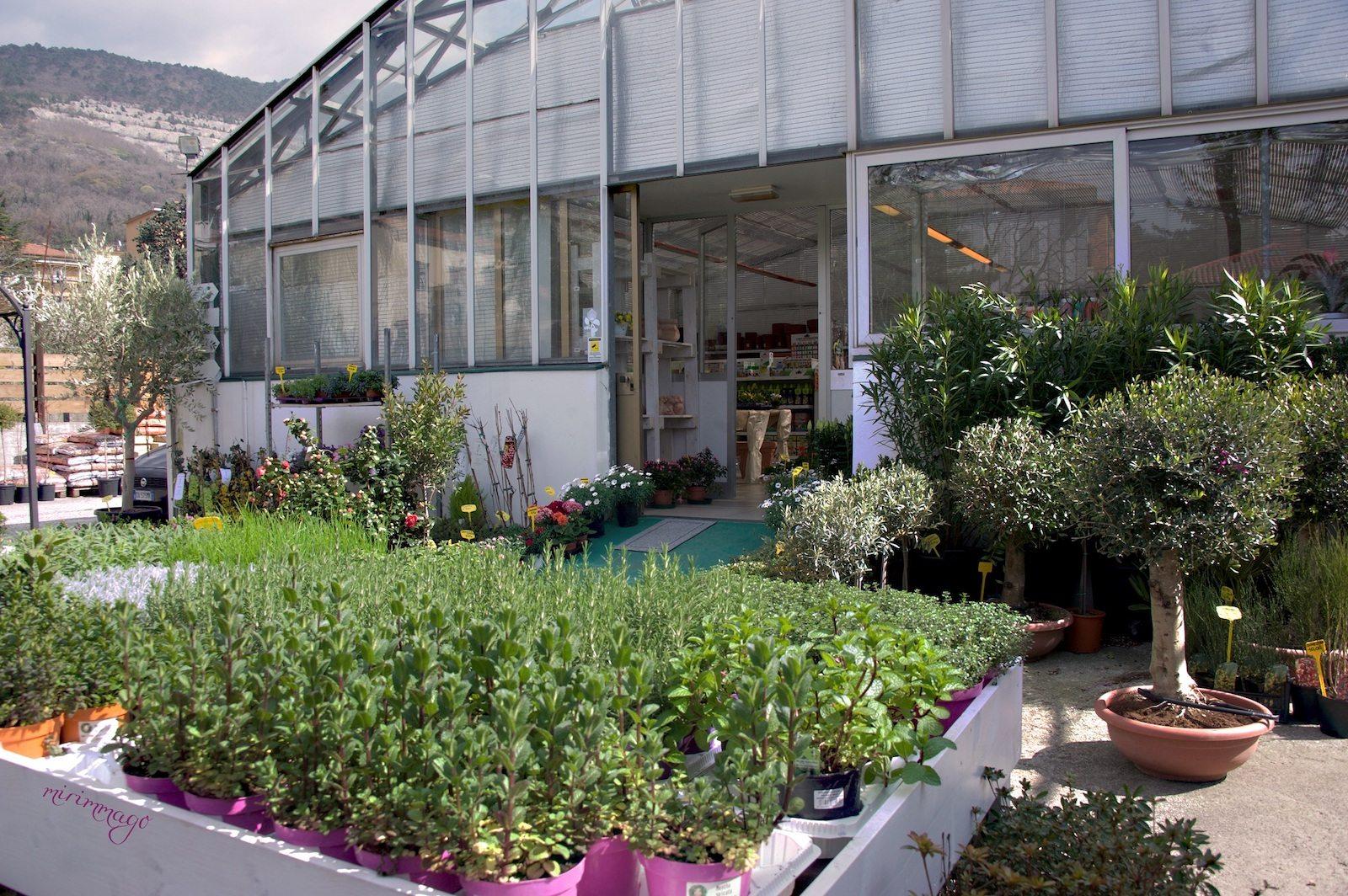 Alberi Ornamentali Da Giardino piante, idee regalo, giardinaggio | biogeste vivai